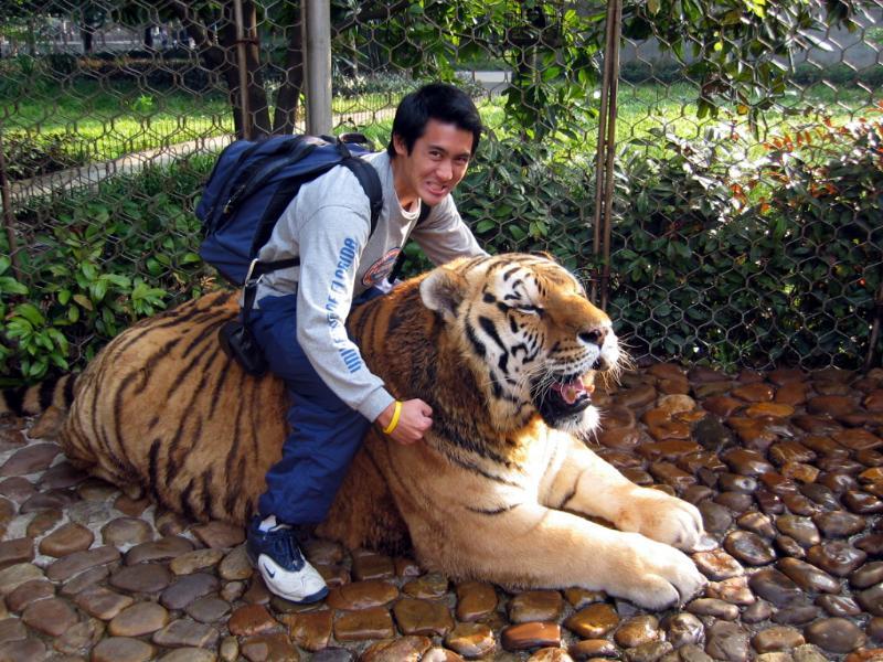 中国野生动物园也有俄罗斯公虎,明显不是中国境内的 高清图片