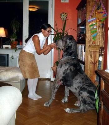 圣伯纳 伟大 的 救援 犬 圣伯纳 犬 saint bernard 又 名 ...