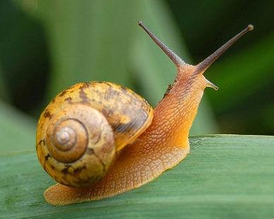牵一只蜗牛去散步 - 我心依然 - 我心依然