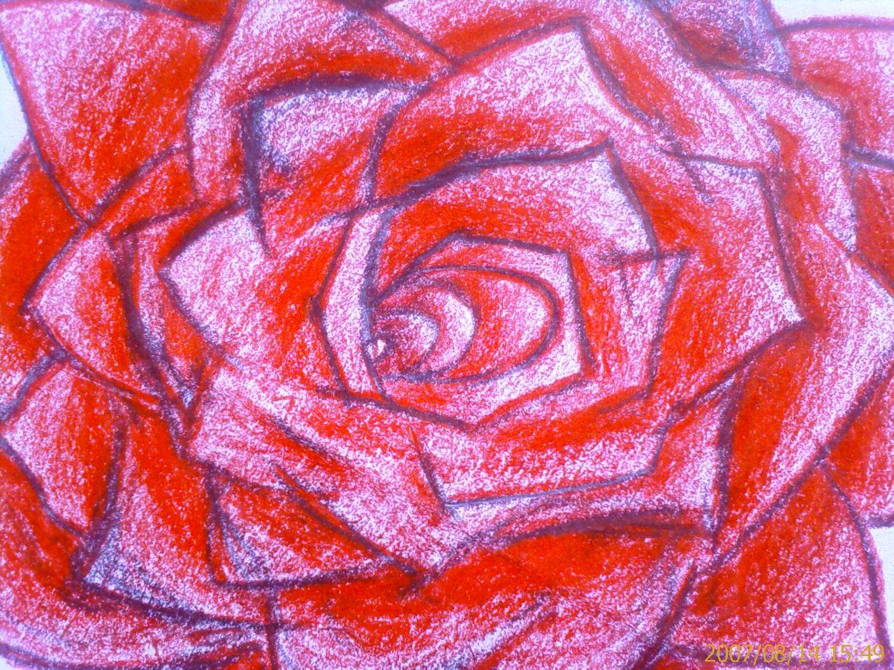 彩色铅笔画玫瑰花 铅笔画玫瑰花的画法 彩色铅笔画玫瑰花图片