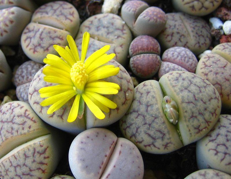 Вопросответ кактусы и цветы