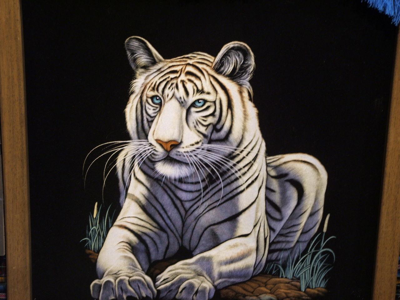 白虎喜欢被老公干屁眼视频_孟加拉白虎图片桌面壁纸 55壁纸网