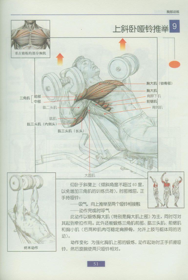 健身囹ailbym~YJ{_百度_健身吧_用哑铃锻炼全身各部位肌肉方法图解!