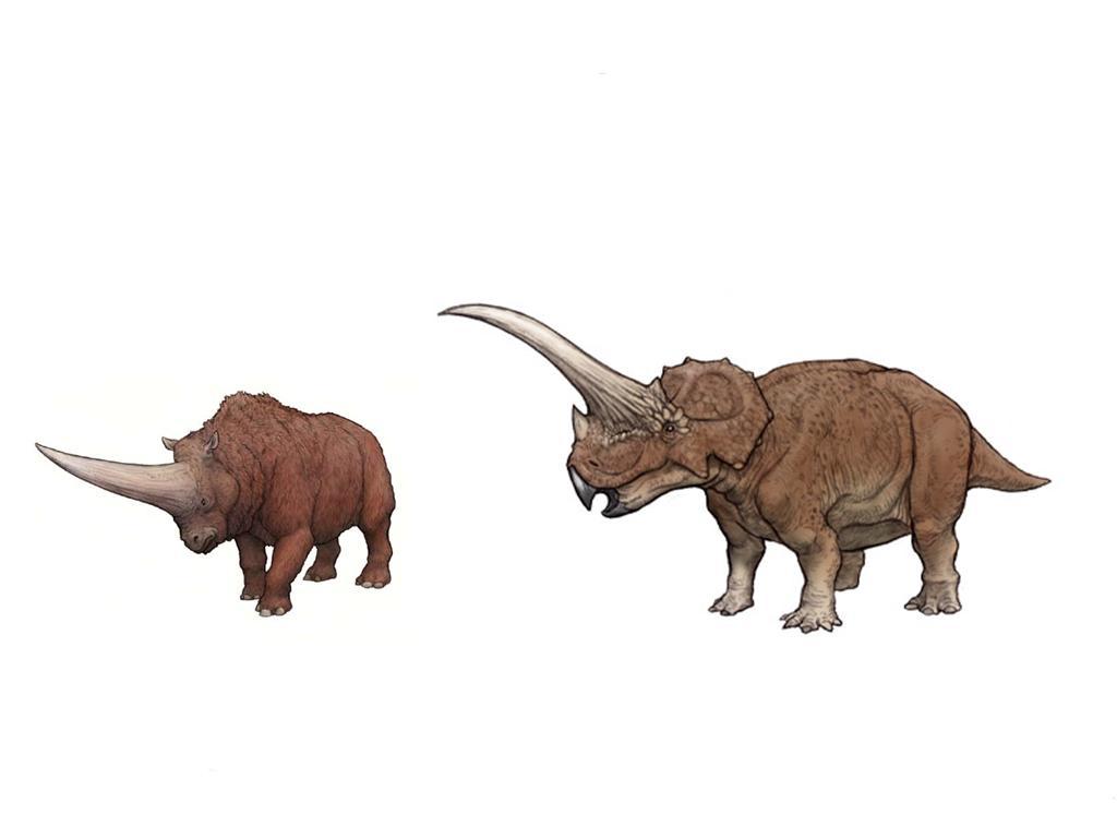 回复:【龙兽争霸】——史前的犀牛可以对抗大型食肉恐龙吗图片