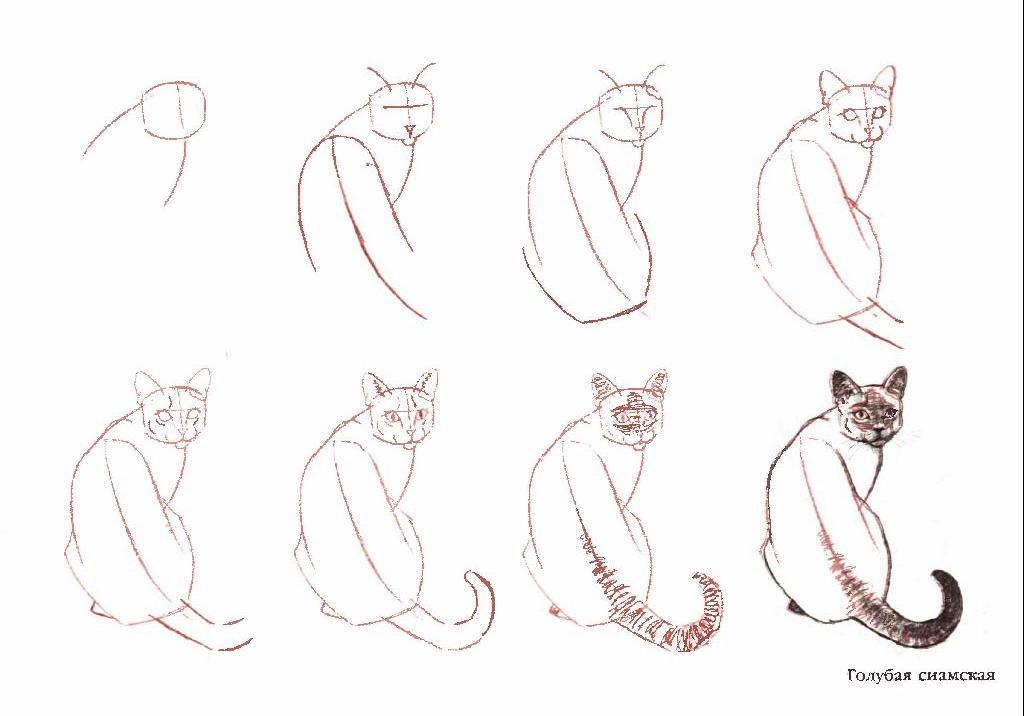 Как рисовать морду
