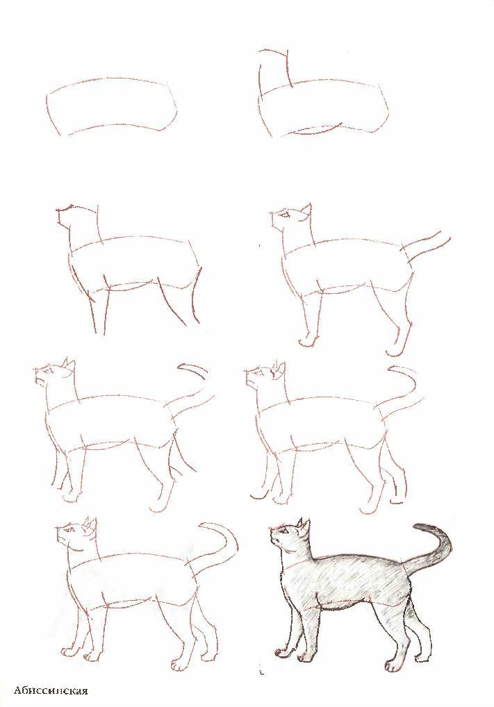 how to draw a good cat