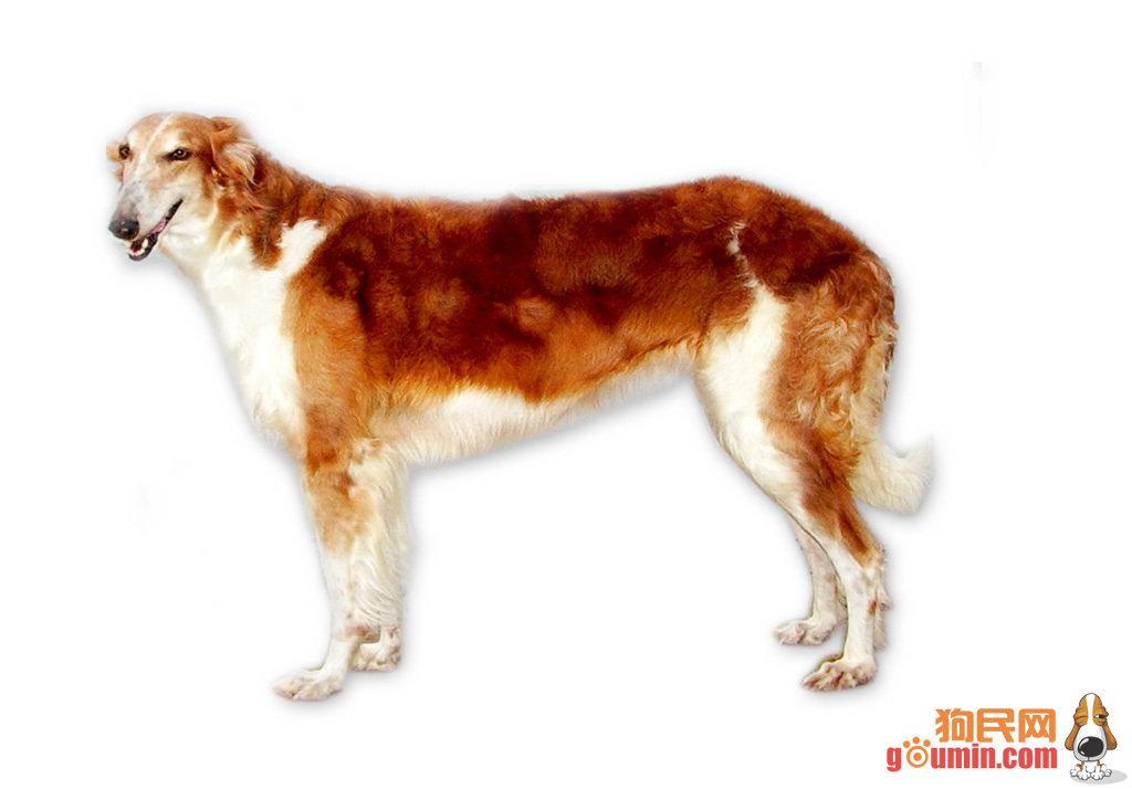 世界十大名狗-长兴岛论坛