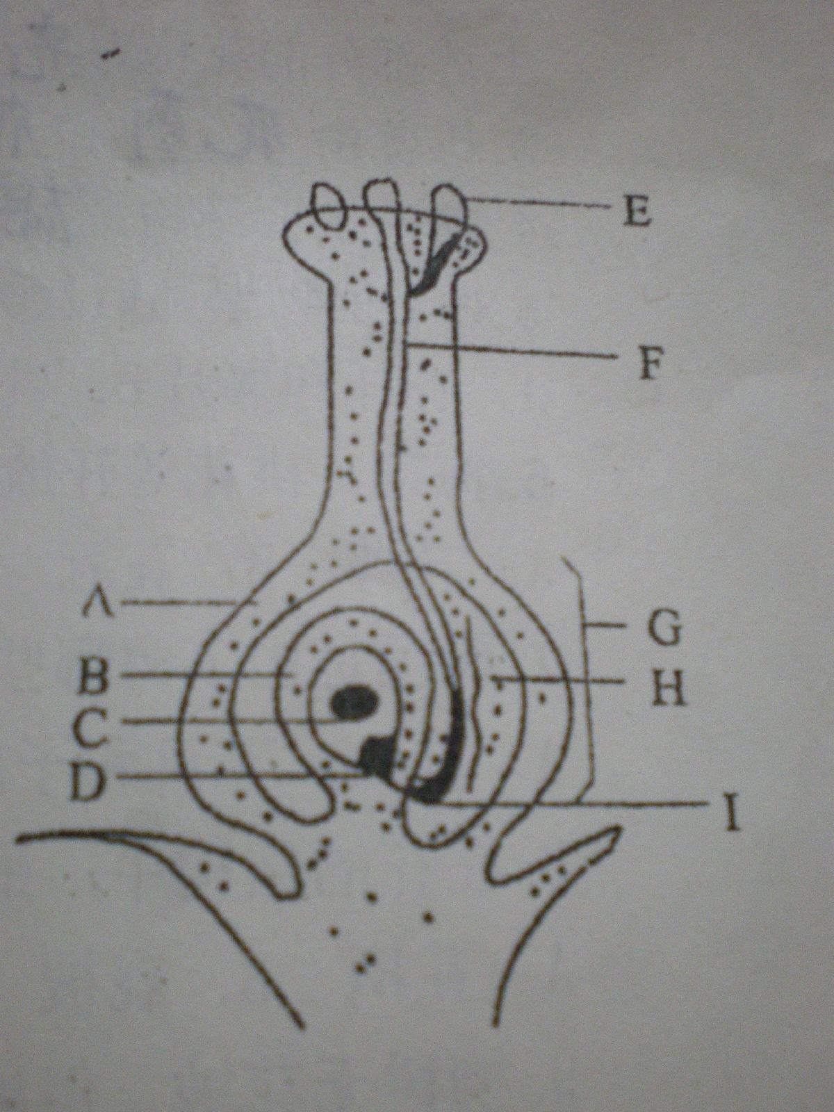 问题】植物的双受精过程示意图_生物吧_百度贴吧