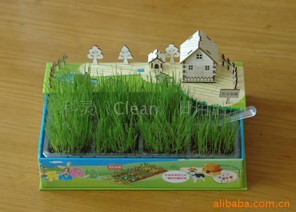 试用这是组装好的小屋子 浇好水的地!很有乐趣的