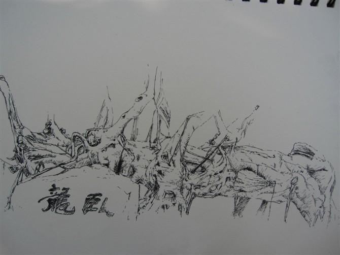 壮胆发几张【钢笔风景速写-树】