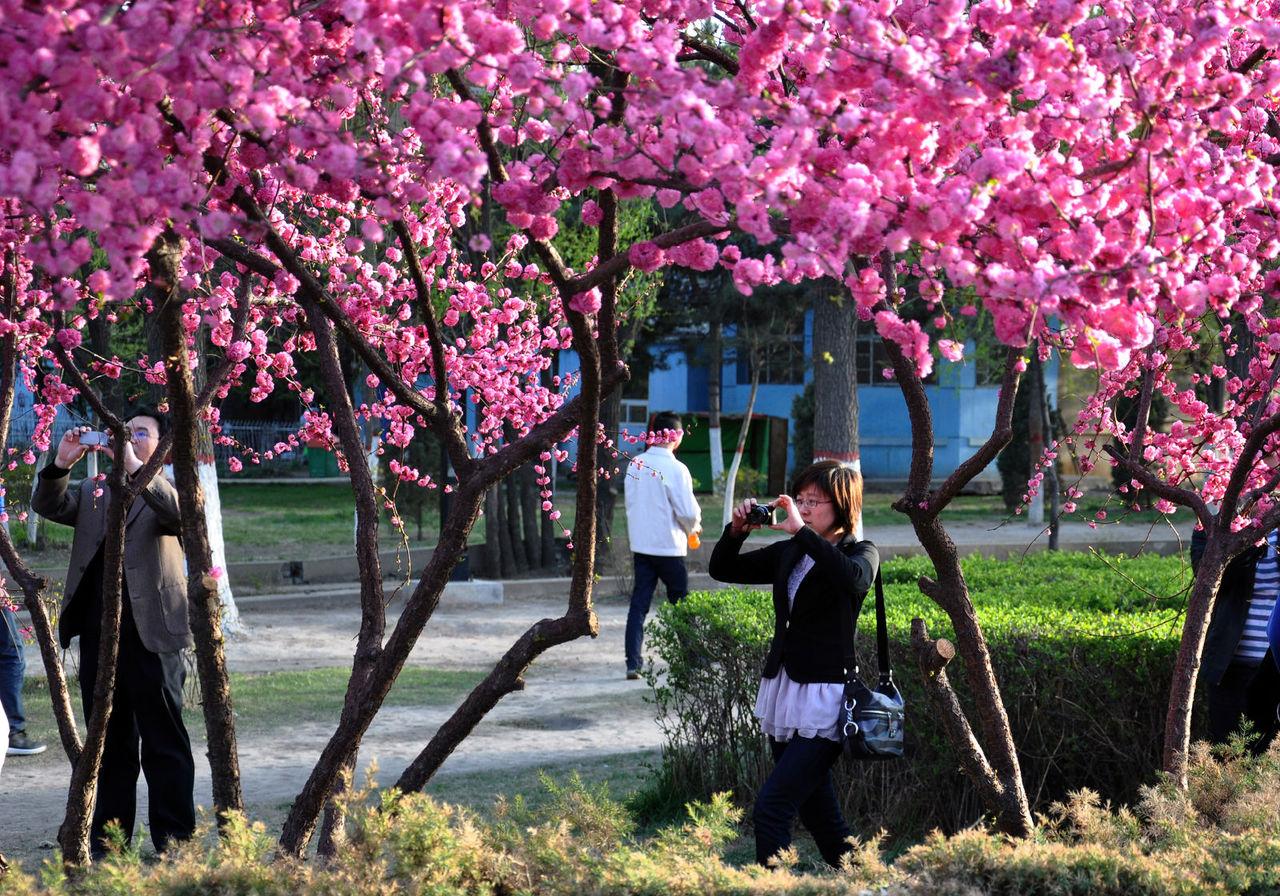 春光无限美【图】_阳高吧_百度贴吧