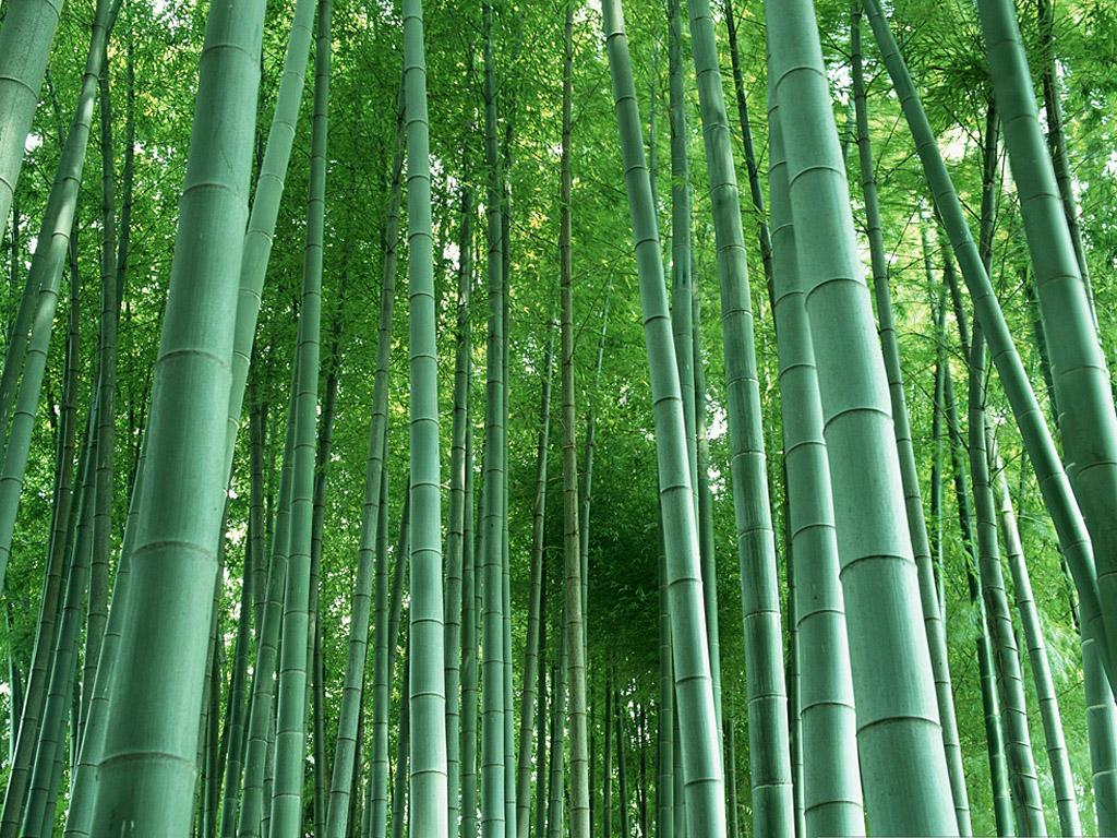 竹林 - 兰馨 - 兰馨的博客