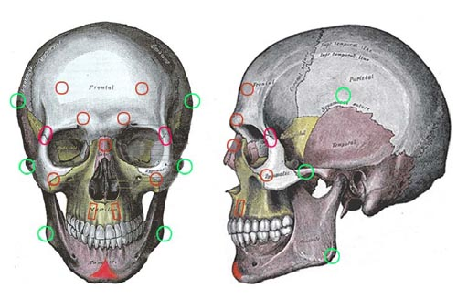 艺用人体结构艺用女性人体艺用人体造型模特