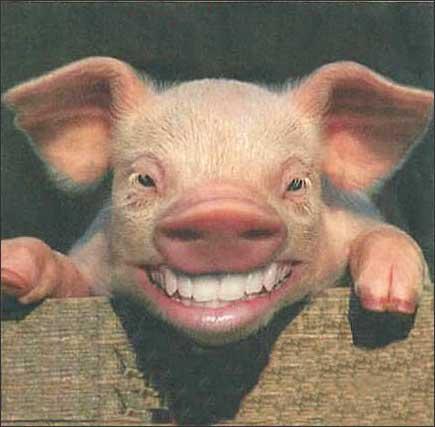 也等于3头猪,还等于一匹马加上一头猪加上一只羊的重量,一头牛等于图片
