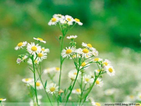 春天开的花有哪些