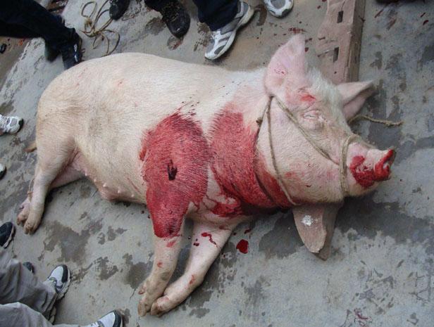 活宰美女_杀女人吃肉恐怖图片 宰女人吃肉恐怖图片