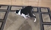 ?狗狗装傻卖萌拖地板 ?
