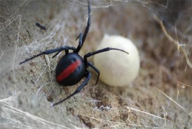 世界最毒的九大蜘蛛感受一下