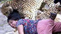 澳门游客南非遭猎豹背后攻击
