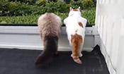 两只趴着看风景的喵