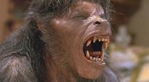 英国现怪兽似狼人 居民欲捕捉