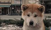 上学前和狗狗连吻三下说再见