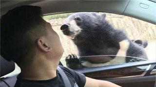 八达岭动物园发布熊咬人视频