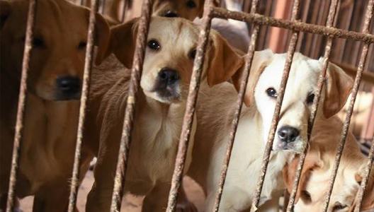 台湾禁吃猫狗肉创亚洲先例