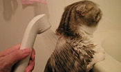 喵星人花式洗澡大合辑