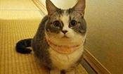 狗狗第一次见到短腿猫的样子