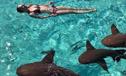 新婚夫妇度蜜月遭鲨鱼袭击