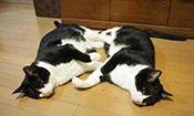 兄弟俩的睡前打闹