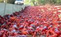 红蟹浩浩荡荡大迁徙路面像红毯