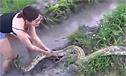实拍美女徒手捉大蟒蛇