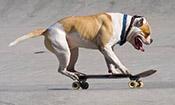 狗狗玩滑板创造世界纪录