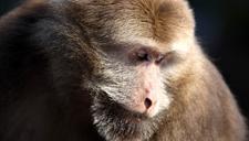顽猴闯都市