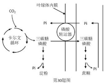 作用_生物 光合作用的基本过程