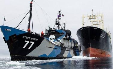日捕鲸船南极计划猎杀333头鲸