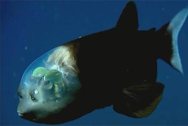 揭秘世界最深点!马里亚纳海沟的秘密