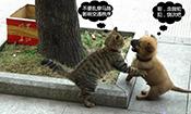 猫狗大战如此搞笑