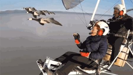 超治愈!法国鸟类学家,与迁徙的鸟儿一同翱翔