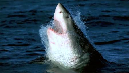 鲨鱼寿命可以长达500年?!海洋多怪事
