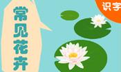 学汉字-常见花卉