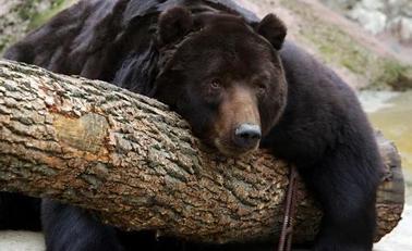男子动物园内下车拿胡萝卜砸熊