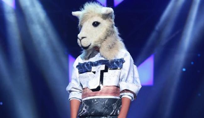 羊驼《他不爱我》