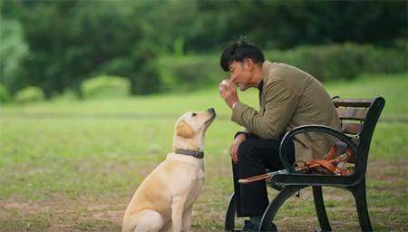 200只狗服务千万视障人群!这部电影让你懂得什么是爱