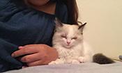 布偶猫吃醋是一种怎样的体验
