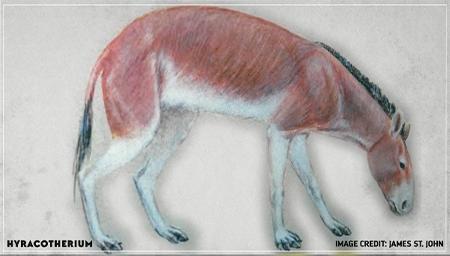 最熟悉的陌生动物,马是如何遍布美洲的