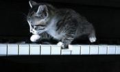 钢琴家与猫,情到深处自然浓