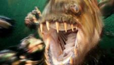超级巨怪鱼